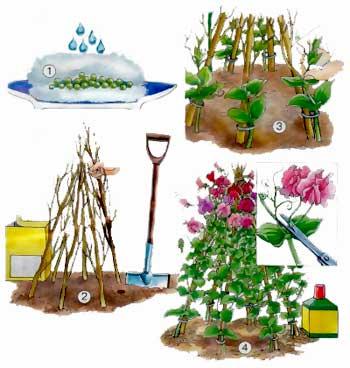 Редкие декоративные растения