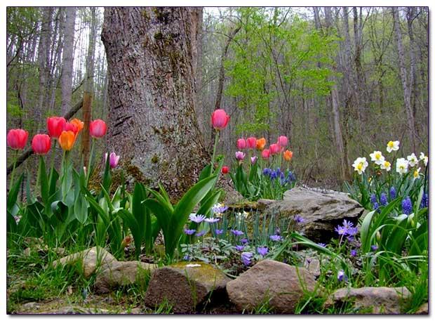 Весенние цветы в саду названия